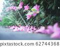 Azalea's flower 62744368