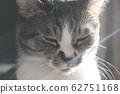양지 속의 고양이 62751168