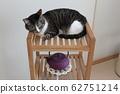 일본 현대적인 고양이 62751214