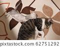 선주 고양이에 붙어자는 고양이 62751292