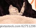 페르시아와 스핑크스 믹스 고양이 행복한 침자 62751296