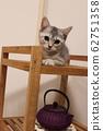 페르시아와 스핑크스 믹스 고양이 일본식 모던 62751358