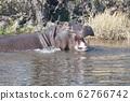 Hyppo in Botswana 62766742