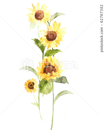 美麗的水彩花卉素材,優雅手繪花 62767382
