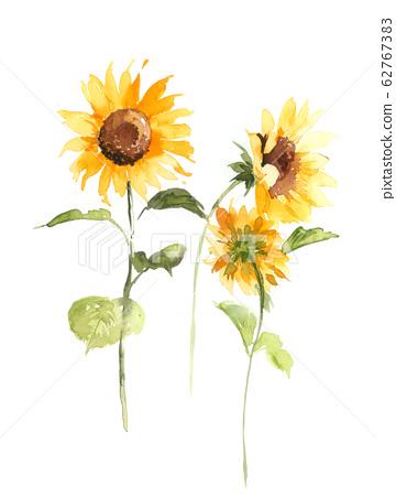 美麗的水彩花卉素材,優雅手繪花 62767383