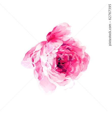 美麗的水彩花卉素材,優雅手繪花 62767395