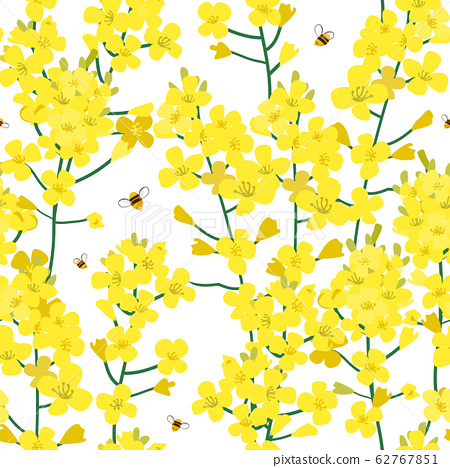 Seamless rape plant pattern, vector flower background. Texture for print, spring summer fashion, textile design, fabric, honey shop website, wallpaper 62767851