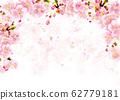 櫻花_背景白色 62779181