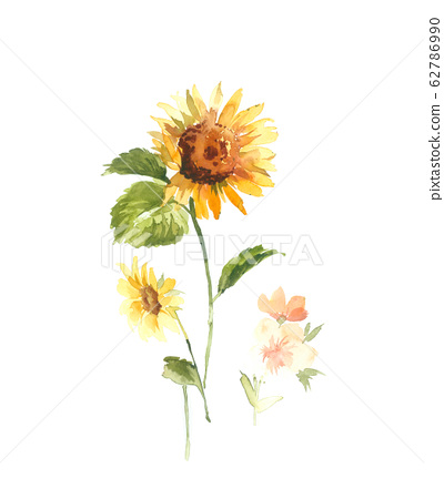 Hand painted watercolor sunflower flower material 62786990