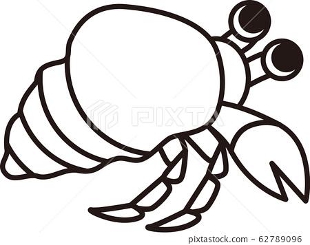 Hermit crab 62789096