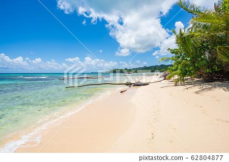 Amazing Caribbean beach in Samana peninsula 62804877
