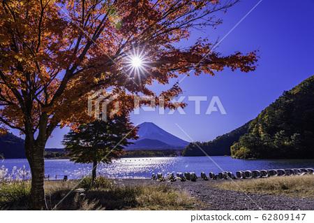 (山梨縣)正治湖,湖濱秋葉和富士山 62809147