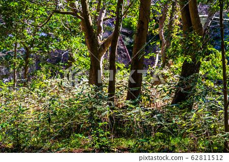 森林裡的熊谷 62811512