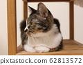 일본의 고양이 62813572