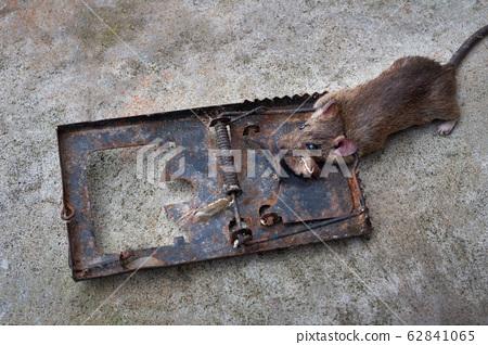 a rat trap killer 62841065