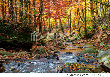 forest river in autumn 62844956
