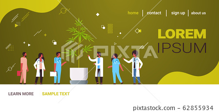 mix race doctors team examining marijuana leaves cannabis plant in pot medical research medicine healthcare concept drugs consumption horizontal copy space full length 62855934