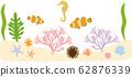 海洋生物 62876339