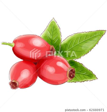 rosehip_watercolor 62880971