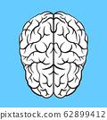 brain illustration 62899412