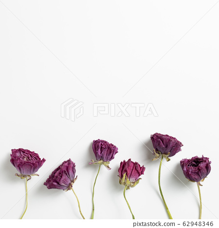 Dry purple ranunculus flowers on white background. Floral composition, flat lay, top view, copy space 62948346
