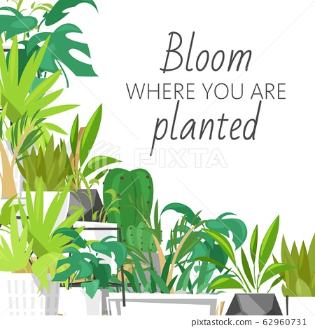 Wild tropical house plants vector illustration, home garden decor. Print design with terrarium and lettering, bloom where you are planted. Monstera, cacti and succulent leaves. 62960731