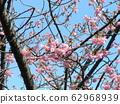 Inage Kaigan站前有5分钟的河津樱花盛开 62968939