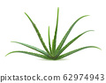 Realistic aloe vera vector illustration on white 62974943