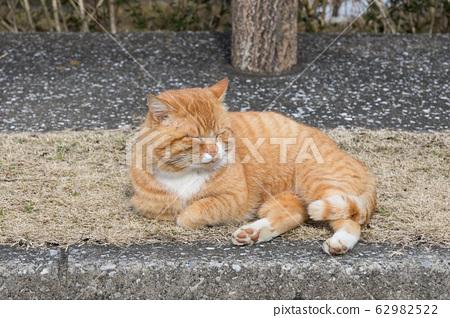 Stray cat in a park by Lake Kameyama, Kimitsu, Chiba, Japan 62982522