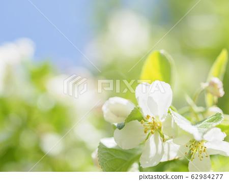 즈미의 꽃 62984277