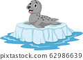 Cartoon seal on ice floe 62986639