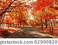Stock Photo: row of trees 62990820