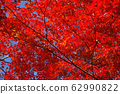 Stock Photo: trees with red leaves, autumn 62990822