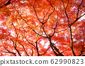 Stock Photo: trees with red leaves, autumn 62990823