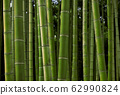 Photo material: Japanese bamboo, bamboo grove 62990824