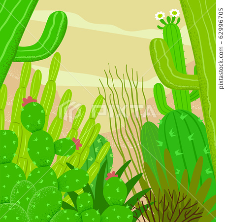 Desert Cactus Illustration 62996705