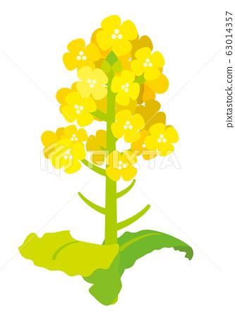 強姦花朵矢量圖 63014357