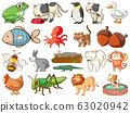 Large set of wildlife with many types of animals 63020942