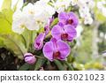 Orchid flower in tropical garden. 63021023