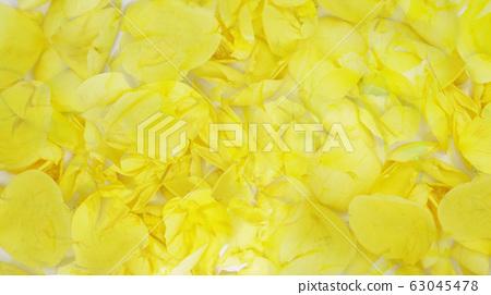 黃玫瑰背景 63045478