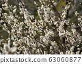 Plum blossom 63060877