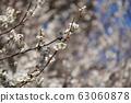 Plum blossom 63060878