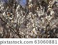 Plum blossom 63060881