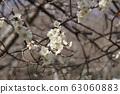 Plum blossom 63060883