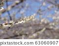 Plum blossom 63060907