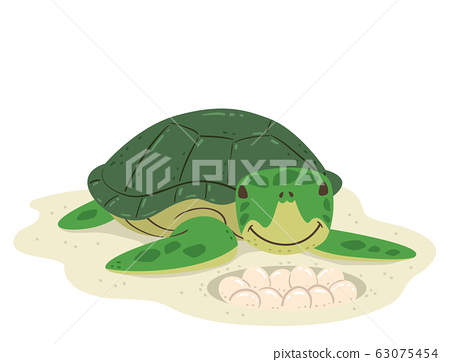 Animal Lay Eggs Turtle Illustration 63075454