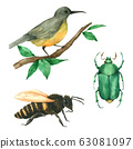 Animal bird bee and bug watercolour isolated on white background 63081097