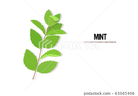realistic mint twig tasty fresh green leaves healthy food concept horizontal copy space 63085406