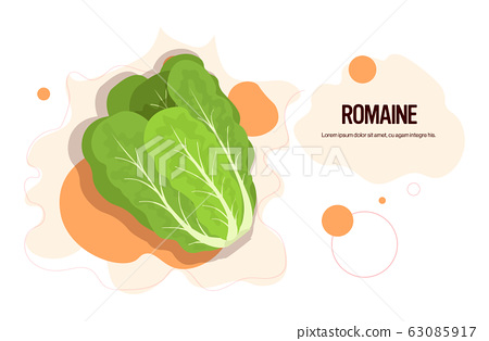 fresh green romaine sticker tasty vegetable icon healthy food concept horizontal copy space 63085917