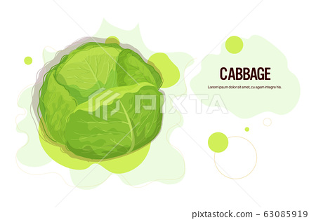 fresh green cabbage sticker tasty vegetable icon healthy food concept horizontal copy space 63085919